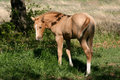 Free Colt In Green Grass Stock Photo - 667430