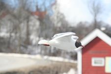 Free Seagul Stock Images - 660304