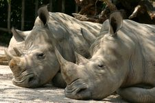 Free Rhinos Stock Photos - 661153
