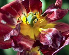 Free Strange Bloom Royalty Free Stock Photos - 661208