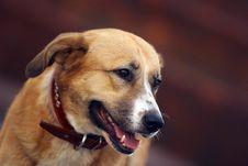 Free Portrait Running Dog Stock Photo - 661540