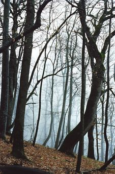 Free Forest In The Fog Stock Photos - 662233