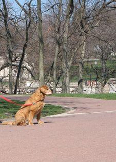 Free Dog Royalty Free Stock Photo - 663335