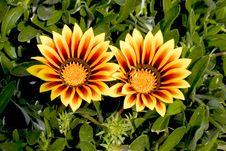 Free Flowers Stock Photos - 663473