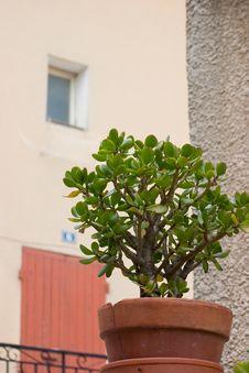 Free Jade Stock Photos - 663523
