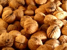 Free Walnuts Royalty Free Stock Image - 663606
