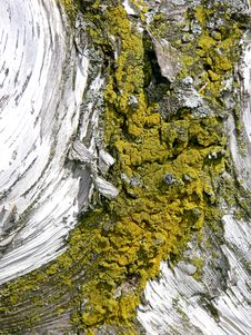 Tree And Moss