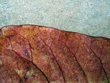 Autumn Leaf Detail Royalty Free Stock Photos