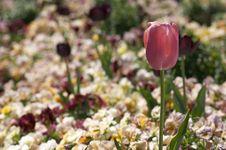 Free Pink Flower Stock Photos - 664463