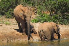 Free African Elephant Royalty Free Stock Photos - 664698