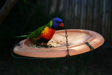 Free Parrot Feeding Stock Photo - 665390