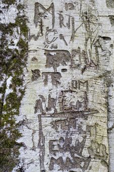 Free Tree Graffiti 2 Royalty Free Stock Photos - 665948