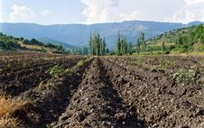 Tillage In Crimea Stock Photo