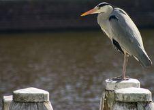 Free Bird On Post 2 Stock Photo - 666370