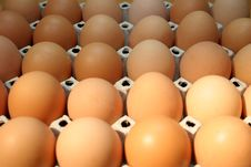 Free Eggs In Box Royalty Free Stock Photography - 666537