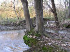 Free Trees Near Brook Royalty Free Stock Photography - 666787