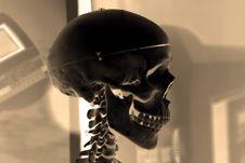 Free X-ray Skull Stock Image - 669821