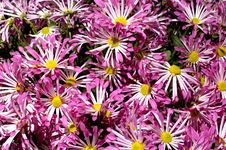 Free Flowers 11 Royalty Free Stock Images - 669899
