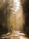 Free Sunny Beam Royalty Free Stock Photography - 6601737