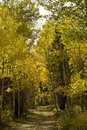 Free Aspen Road Stock Image - 6603551