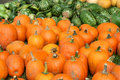 Free Bunch Of Pumpkins And Gourds Royalty Free Stock Images - 6609149