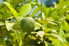 Free Green Lime Stock Images - 6600014