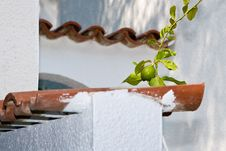 Free Lime Above A Tile Roof Stock Photography - 6600042