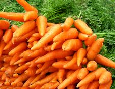 Free Orange Carrot Background Royalty Free Stock Photography - 6600167