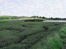 Free Coastal Estuary Stock Images - 6600234