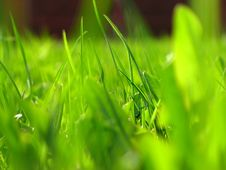 Free Green Grass Royalty Free Stock Photography - 6600507