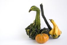 Free Different Shaped Gourds Stock Photography - 6600792