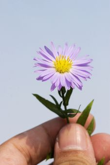 Free Daisy For You Royalty Free Stock Photography - 6600847