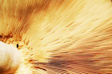 Free Mushroom Royalty Free Stock Image - 6601716