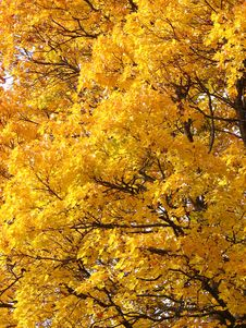 Free Yellow Leaves Background Stock Photos - 6602183