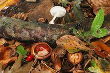 Free Autumn Still Life Stock Photo - 6602230