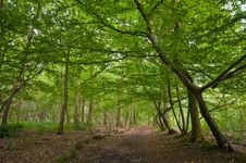 Free Green Forest Royalty Free Stock Images - 6602749