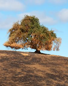Tree After Brush Fire (vert) Stock Photography