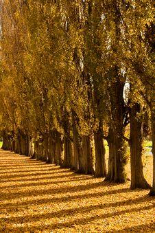 Free Autumn Shadows Stock Images - 6604864