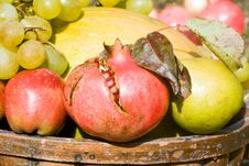 Free Fruits Harvest Royalty Free Stock Photo - 6605295