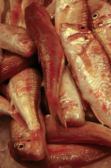 Free Red Mullet Royalty Free Stock Photo - 6605335