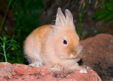 Free Small Bunny Royalty Free Stock Photo - 6605345