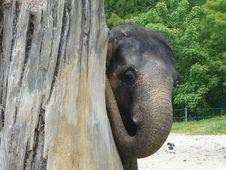 Free Elephant Royalty Free Stock Photography - 6606397