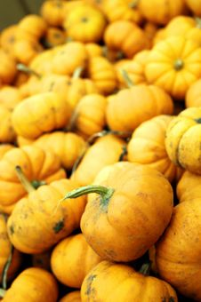 Free Mini Pumpkins Royalty Free Stock Photo - 6606585
