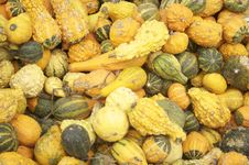 Free Squash And Gourd Assortment Royalty Free Stock Photos - 6606588