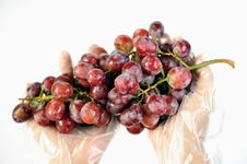 Free Grapes 4 Royalty Free Stock Photos - 6606768