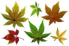 Free Autumn Leaf Stock Image - 6607391