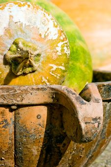 Free Pumpkin Harvest Royalty Free Stock Photo - 6607705