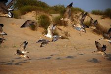 Free Seagulls Stock Photo - 6609820