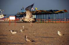 Free Seagulls Stock Photo - 6609990