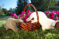 Free Three Kittens In A Basket Royalty Free Stock Photos - 6612438